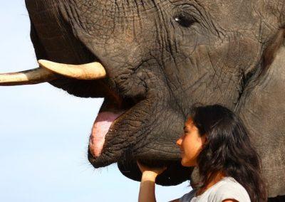 AP Elephants (17)