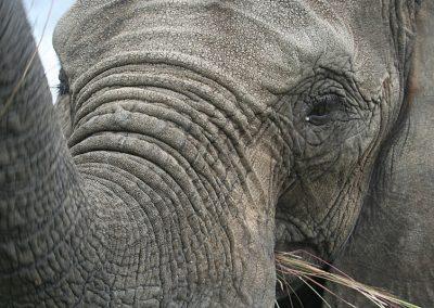 AP Elephants (22)