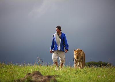 AP Lion Walks (4)