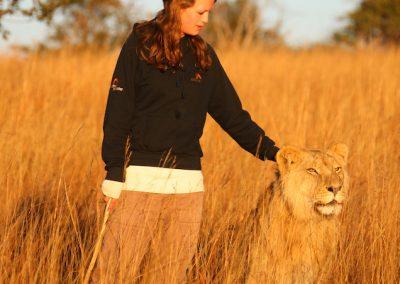 AP Lion Walks (9)