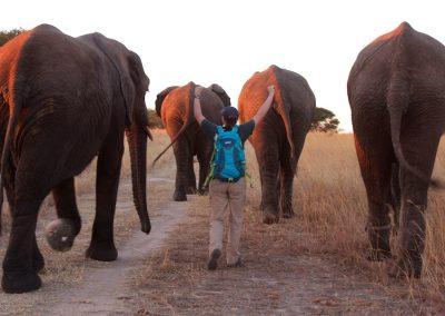 Elephant Walk Antelope Park 1
