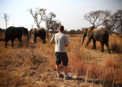 Elephant Walk Antelope Park 2
