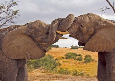 Elephant Walk Antelope Park 3