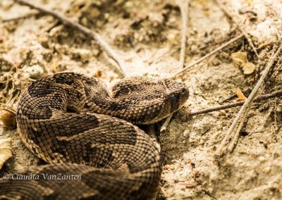 Snakes Antelope Park 4