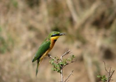 birds-of-zimbabwe-03