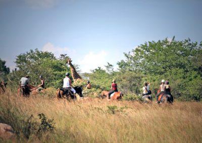 horse-safari-zimbabwe-03