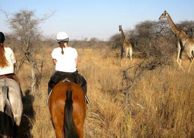 horse-safari-zimbabwe-05