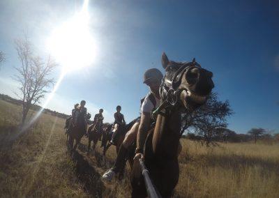 Antelope Park Horse Volunteer 11