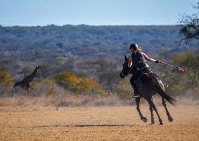 Antelope Park Horse Volunteer 3