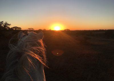 Antelope Park Horse Volunteer 6