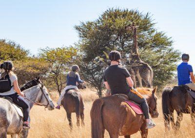 Horse & Lion Volunteering Antelope Park 7