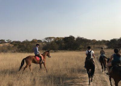 Horse & Lion Volunteering Antelope Park 8