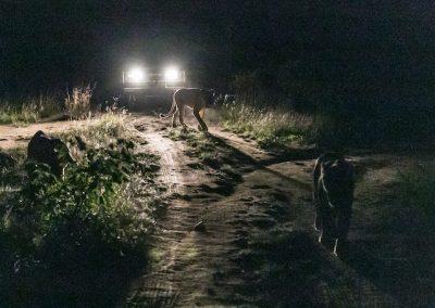 Night Encounter 1