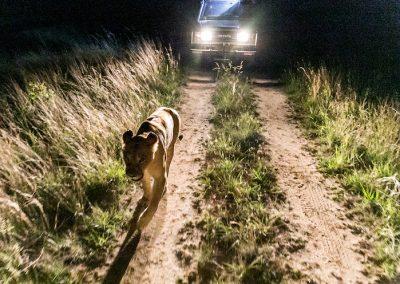 Night Encounter 4