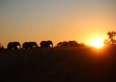 Sunset Game Drive 1