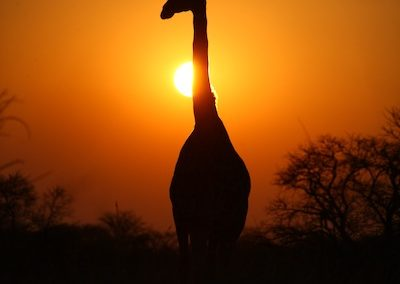 Sunset Game Drive 2