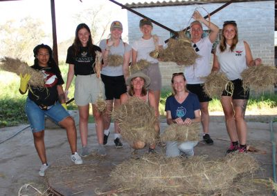 Teaching Lions Antelope Park 2