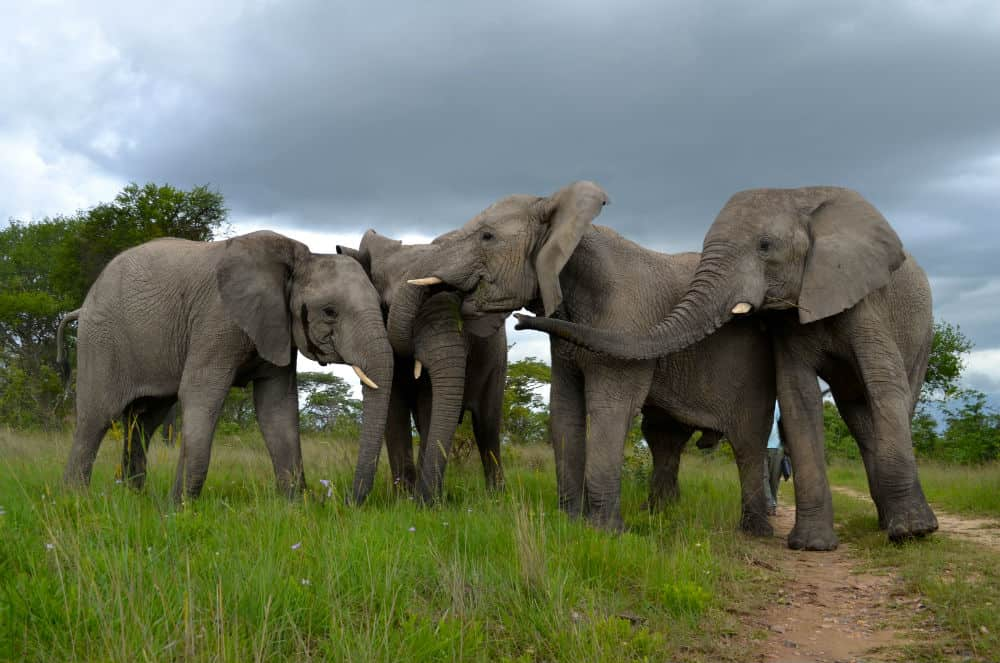 Get to know our orphaned/rescued elephants
