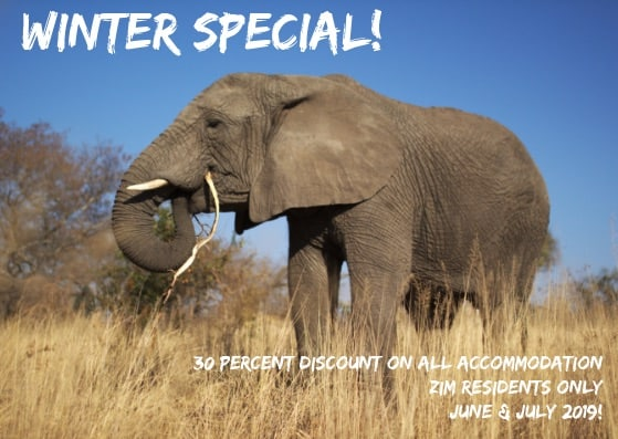 Our Winter 2019 Special